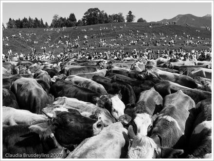 Denn es gehet dem Menschen wie dem Vieh ...