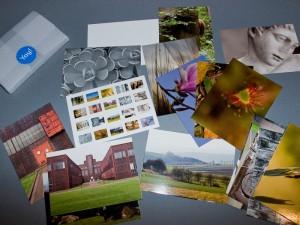 Set von 20 Moo-Postkarten, Rückseite unbedruckt