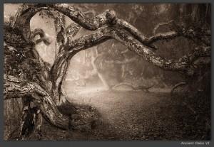 """""""Ancient Oaks VI"""" von Igor Svibilsky"""