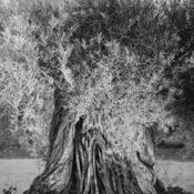 """Ausstellungstipp: """"Götterbäume"""" von Christian von AlvenslebenExhibition: """"Gods' Trees"""" by Christian von Alvensleben"""